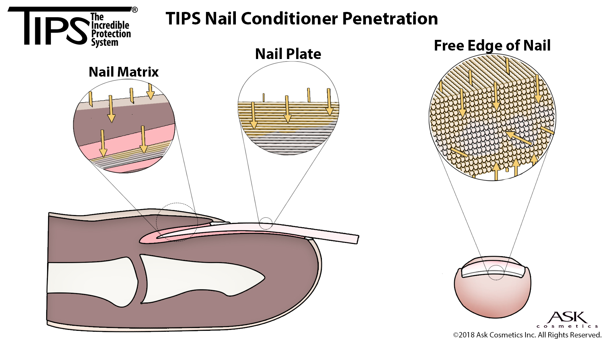 Tips nail conditioner quick view pooptronica Choice Image
